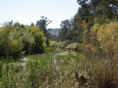 Cox's River