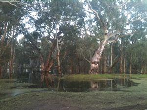 FloodedMurrumidgee12